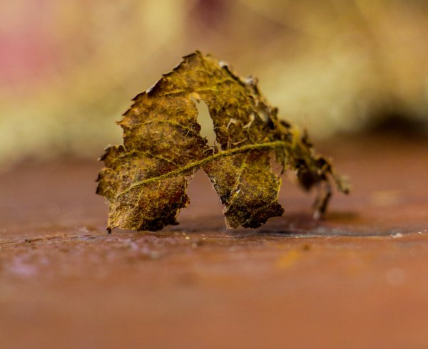 Crunchy Leaves Photography by Airavata Studios
