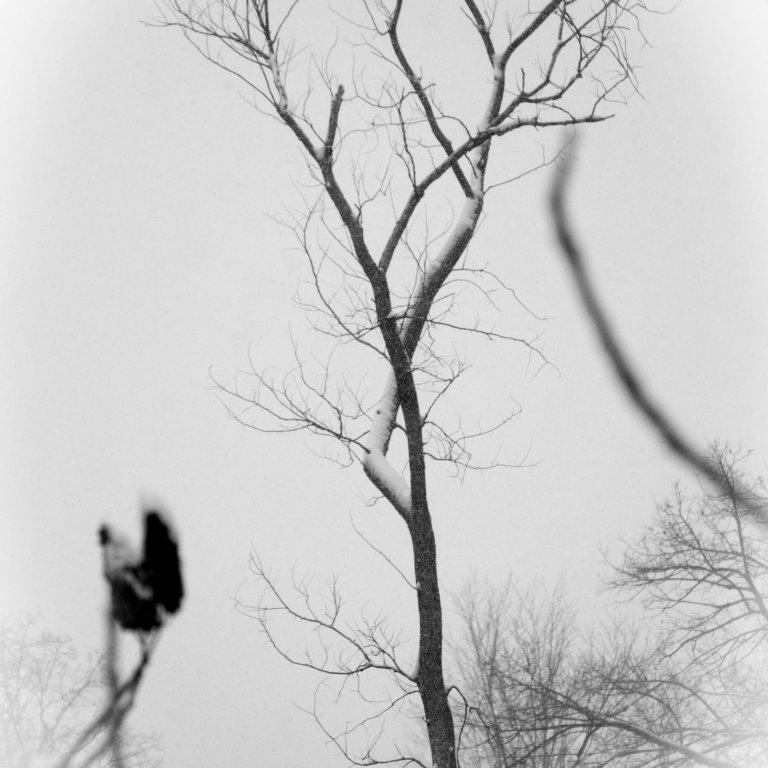Michigan Nature Photography by Airavata Studios